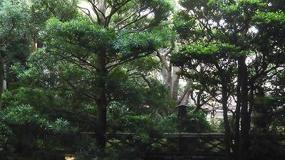 f:id:kabutoyama-tigers:20200624032134j:plain
