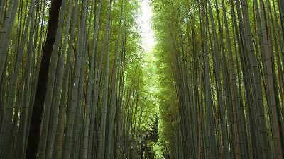 f:id:kabutoyama-tigers:20200624141021j:plain