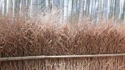 f:id:kabutoyama-tigers:20200624143115j:plain