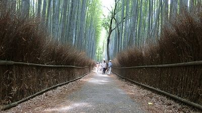 f:id:kabutoyama-tigers:20200624143339j:plain