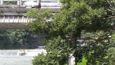 f:id:kabutoyama-tigers:20200624144536j:plain