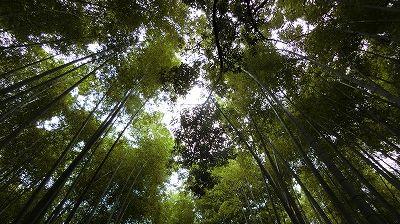 f:id:kabutoyama-tigers:20200624160832j:plain