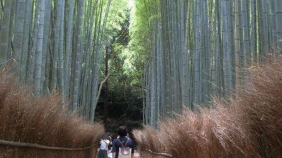 f:id:kabutoyama-tigers:20200624161502j:plain