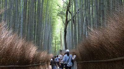 f:id:kabutoyama-tigers:20200624161755j:plain
