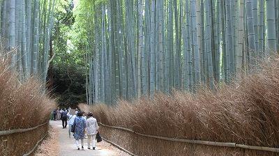 f:id:kabutoyama-tigers:20200624162648j:plain