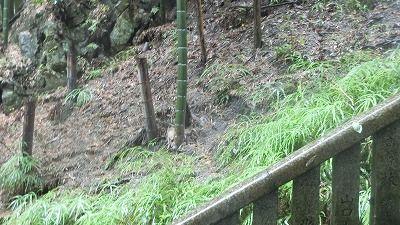 f:id:kabutoyama-tigers:20200704062804j:plain