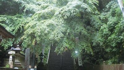 f:id:kabutoyama-tigers:20200704063143j:plain