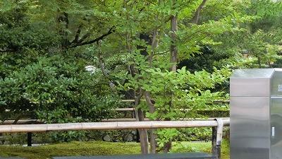 f:id:kabutoyama-tigers:20200722083504j:plain