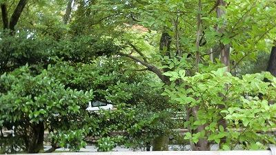 f:id:kabutoyama-tigers:20200722085812j:plain