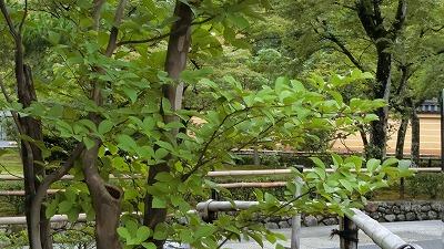 f:id:kabutoyama-tigers:20200722085930j:plain