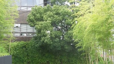 f:id:kabutoyama-tigers:20200722105147j:plain