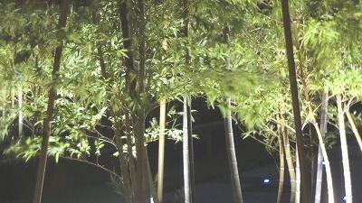 f:id:kabutoyama-tigers:20200729121732j:plain