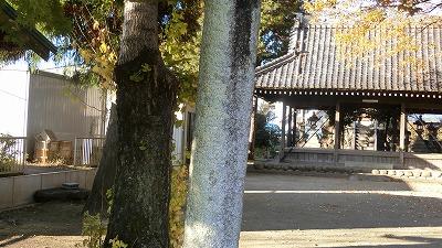 f:id:kabutoyama-tigers:20201118140623j:plain
