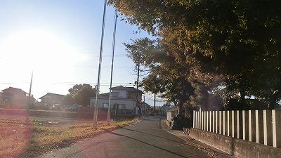 f:id:kabutoyama-tigers:20201118142635j:plain