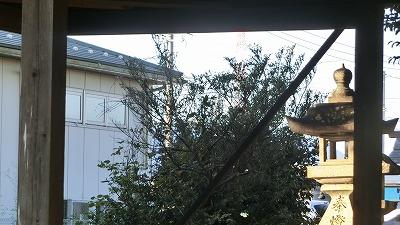 f:id:kabutoyama-tigers:20201118155227j:plain