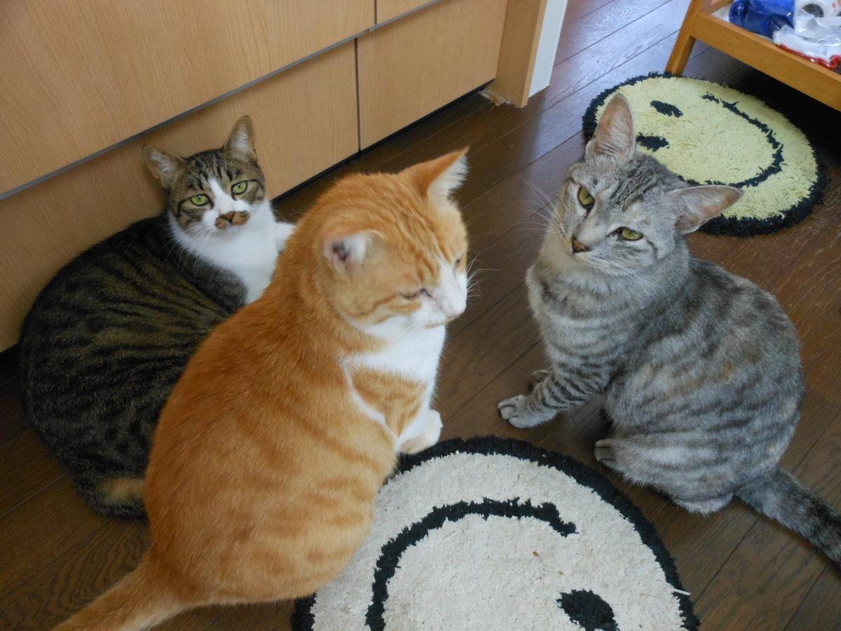 茶白猫 キジ白猫 サバ猫