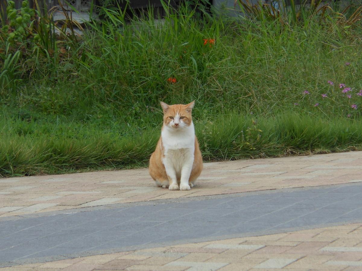 茶トラ猫 庭