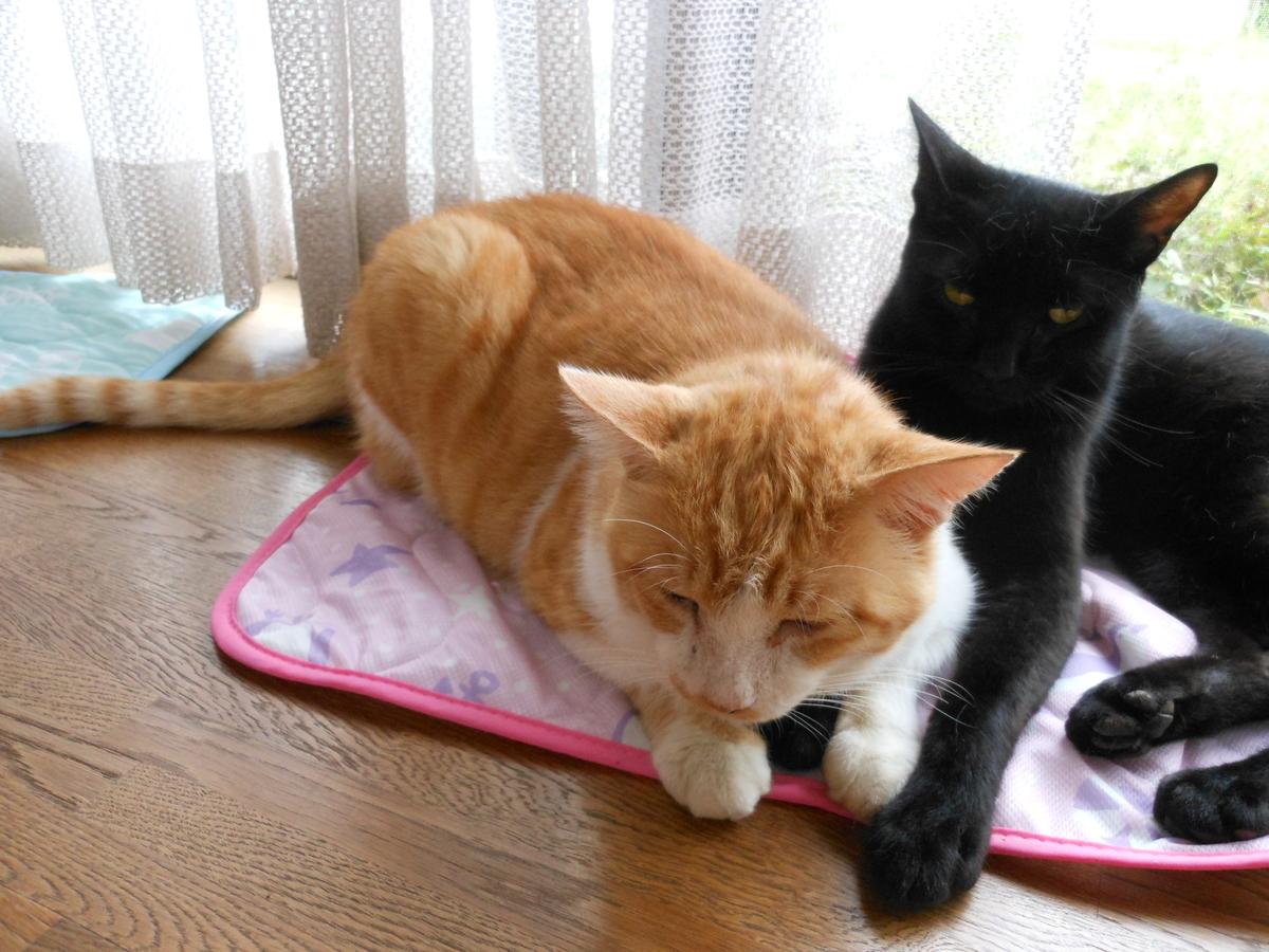 茶トラ猫と黒猫