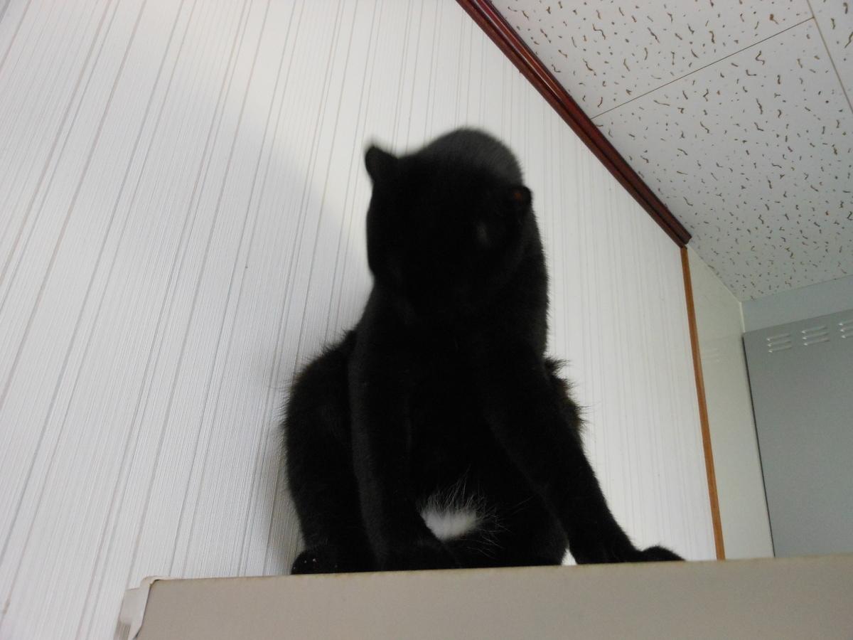 黒猫 エンジェルマーク
