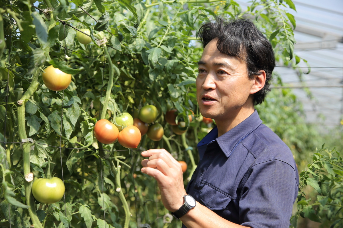 加藤トマト園代表の加藤さん