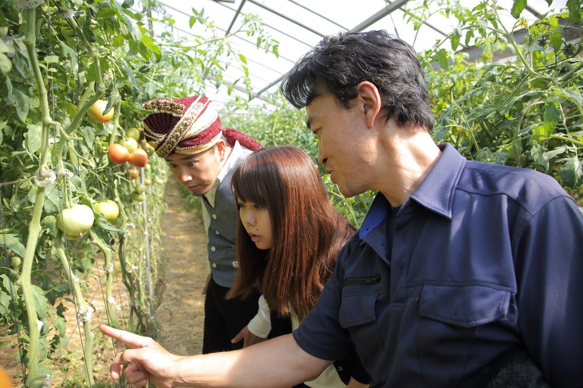 ハウス栽培しているトマトについて加藤さんから説明を受けている名久井とスパイシー丸山