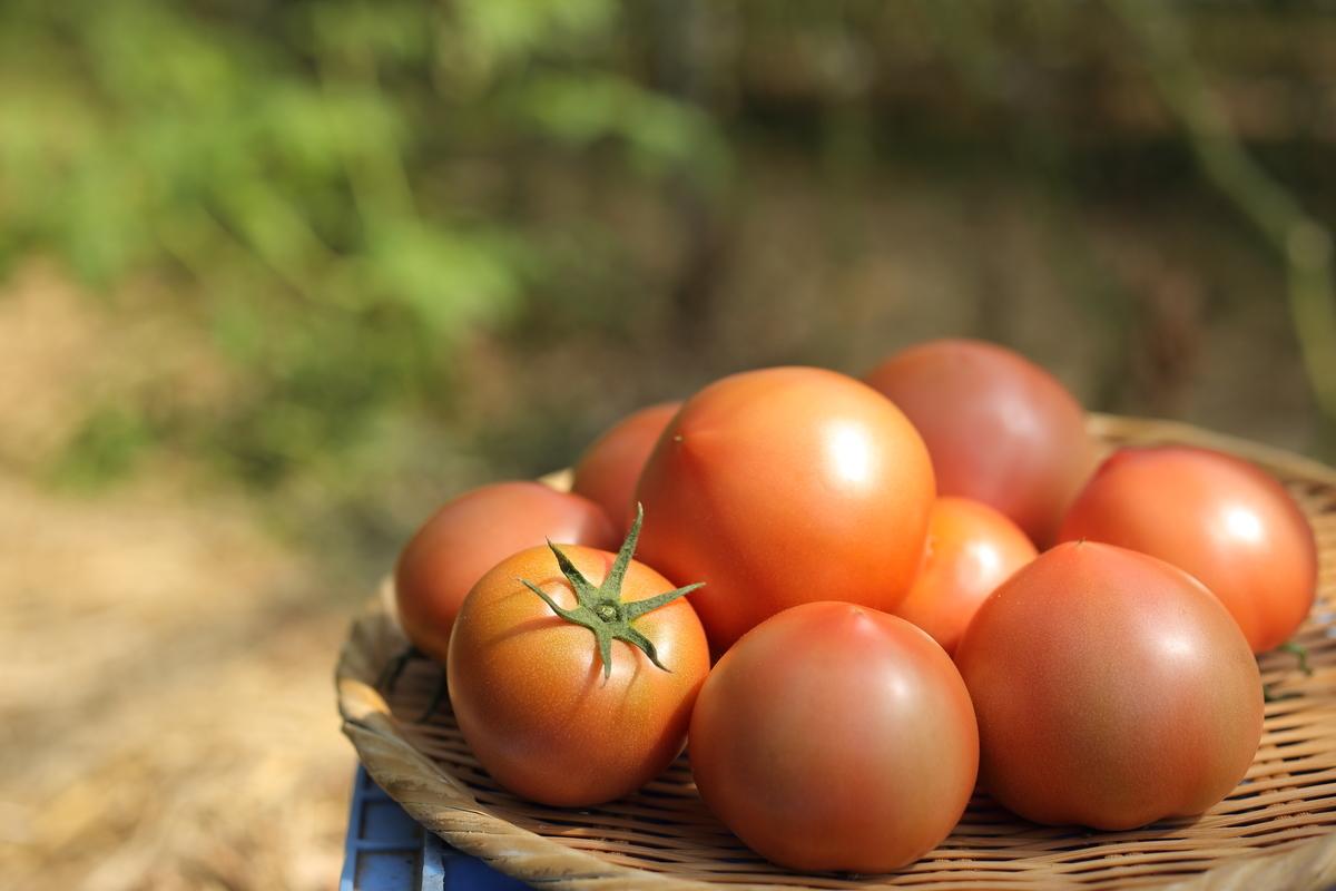 熟す前の青みがかったトマト