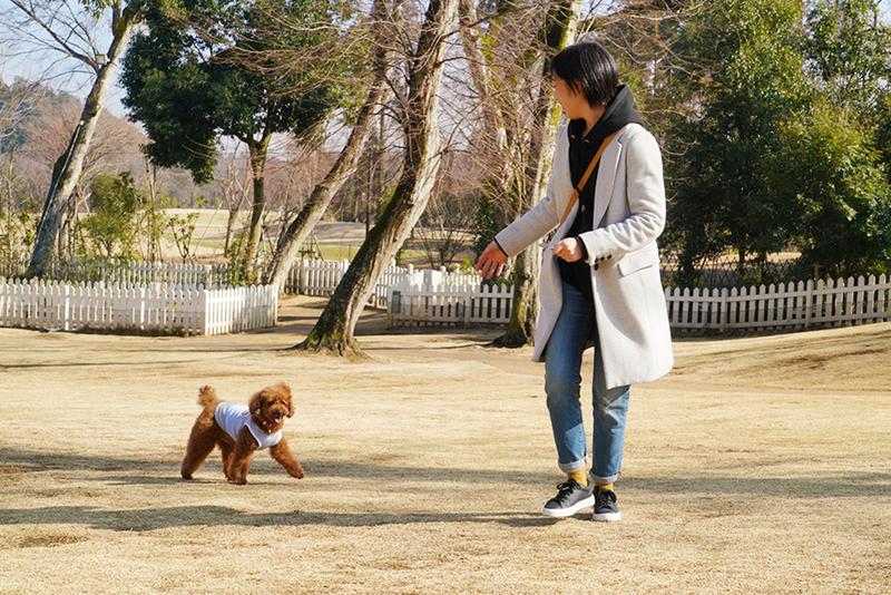 ドッグランで遊ぶココア君とユキさん