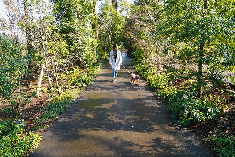 「四季の花径」で散歩するユキさんとココア君
