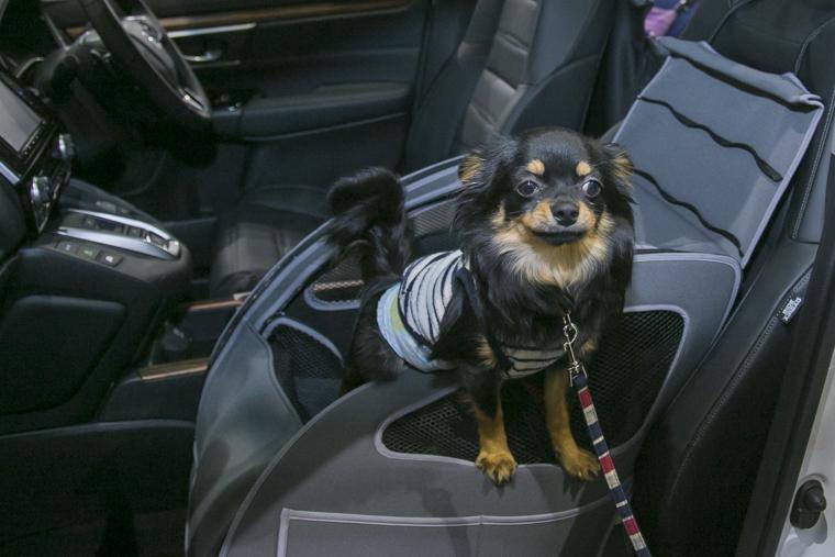 ペットのための助手席シート「ペットシートプラスわん」