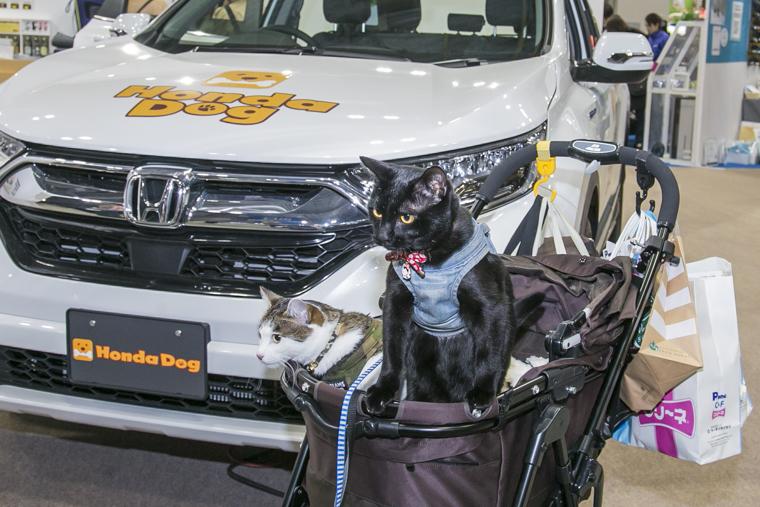 Hondaブースに立ち寄った、黒猫のくまきちくんとキジ白猫のモコ太くん