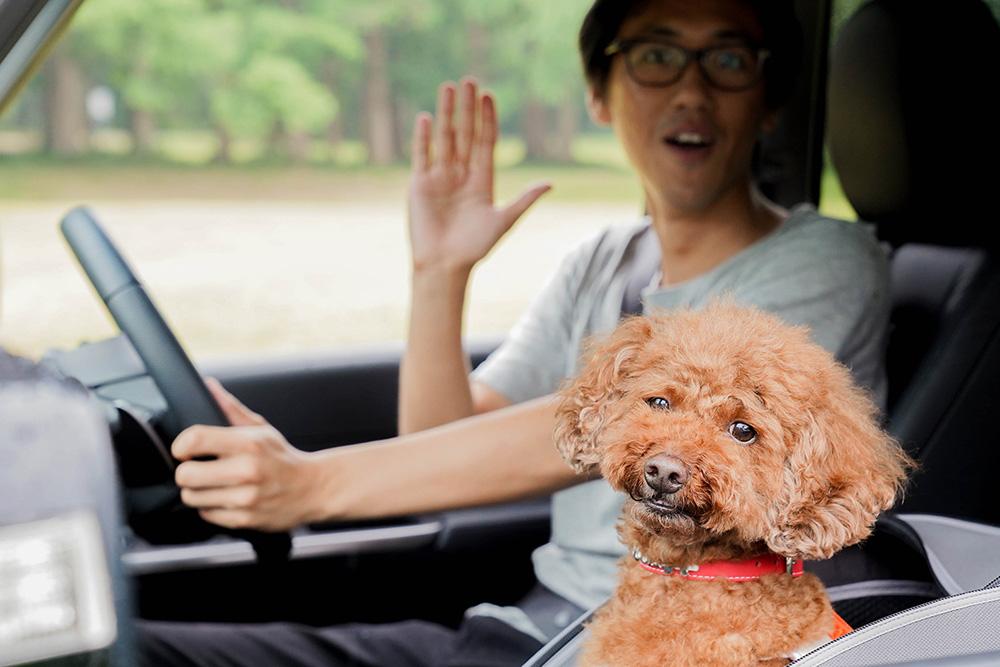 ステップワゴンに乗って公園にやってきたトイプードルのココアちゃんと飼い主の関さん