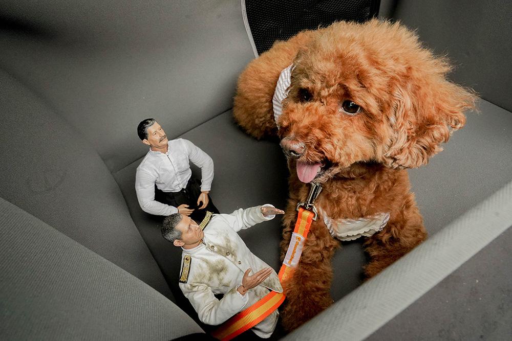 Honda Dogのペットサークルに入っている、ペット車外飛び出し防止リードをつけたトイプードルとミフネさん、ヨシダさん