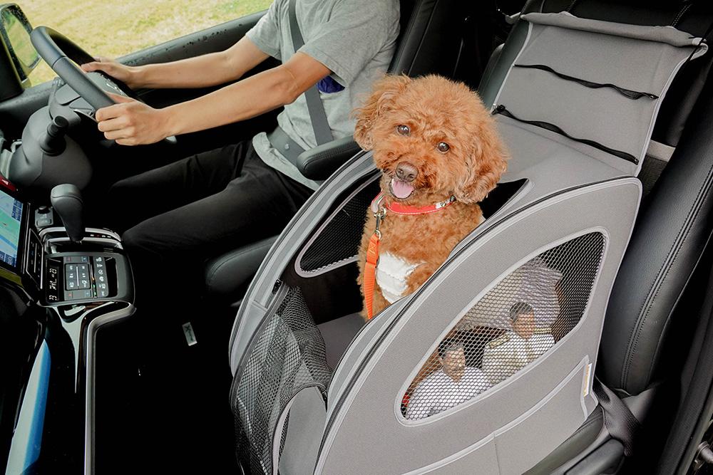 Honda Dogのペットシートプラスわんに入っているトイプードルのココアちゃんとヨシダさん、ミフネさん