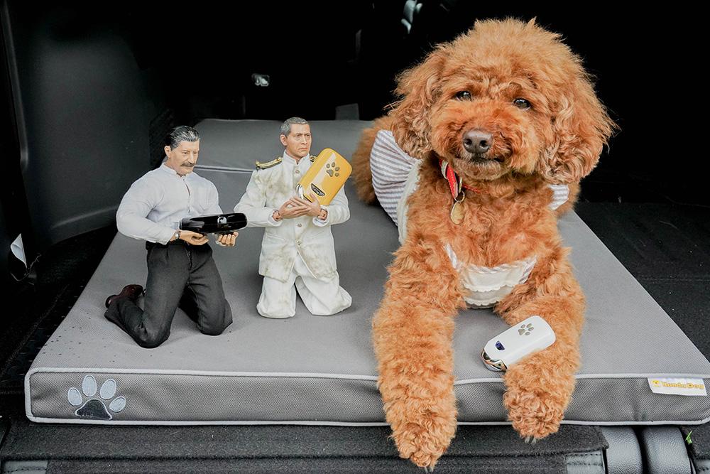 Honda Dogのペットキーカバー(肉球)をもつトイプードルのココアちゃんとヨシダさん、ミフネさん