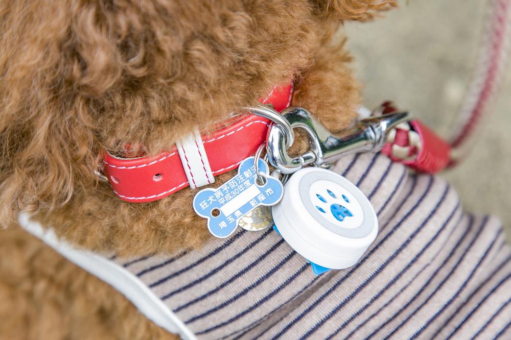 犬の首輪につけた狂犬病予防注射済のプレート