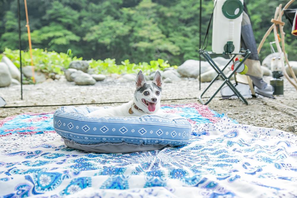 クッションの上に座る犬