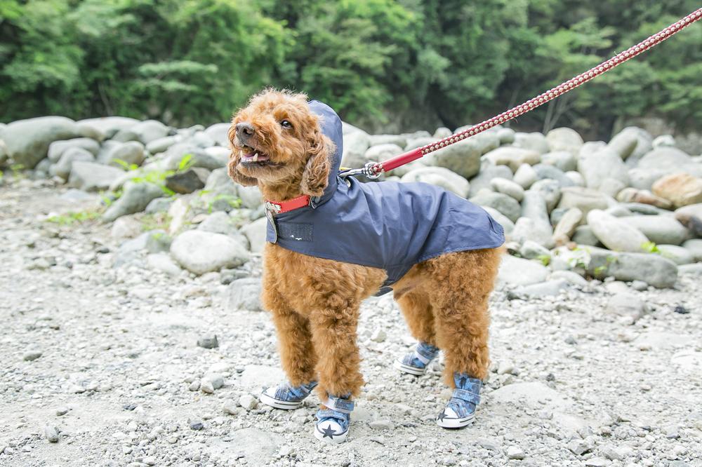 レインコートを着て靴を履いた犬