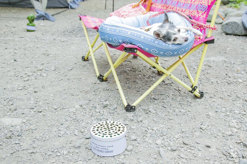 クッションの上で眠るペット。近くに蚊取り線香
