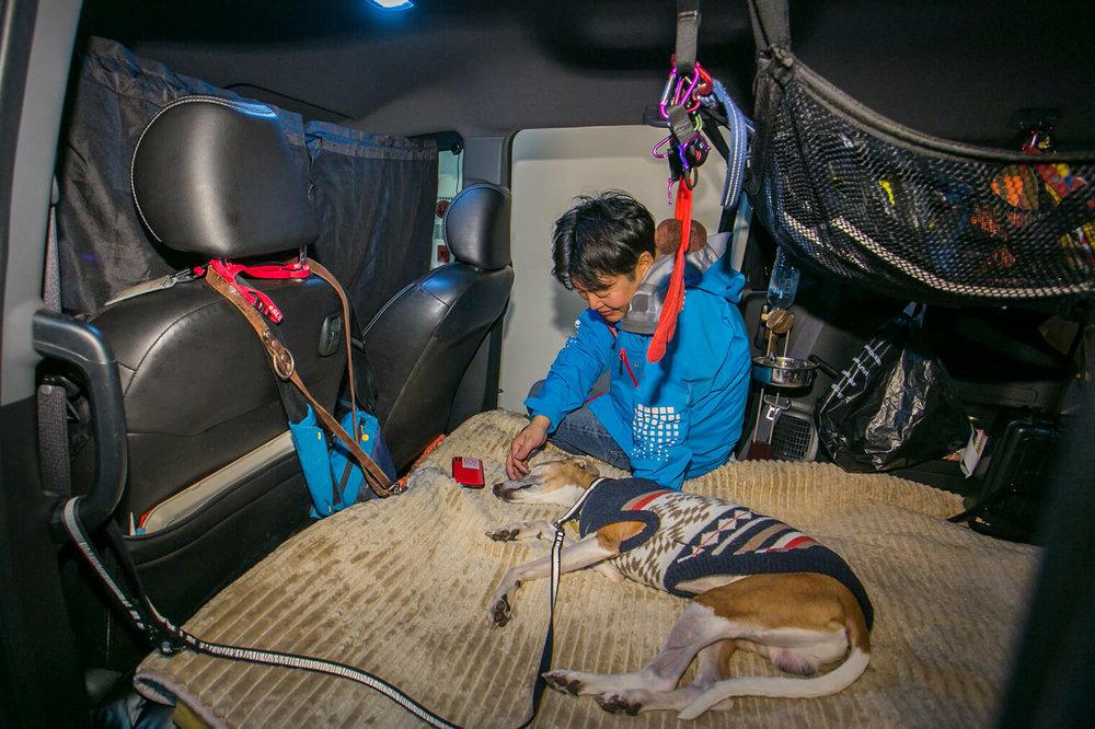 車中泊するフリードスパイクの荷室でペットの犬と寛ぐ男性