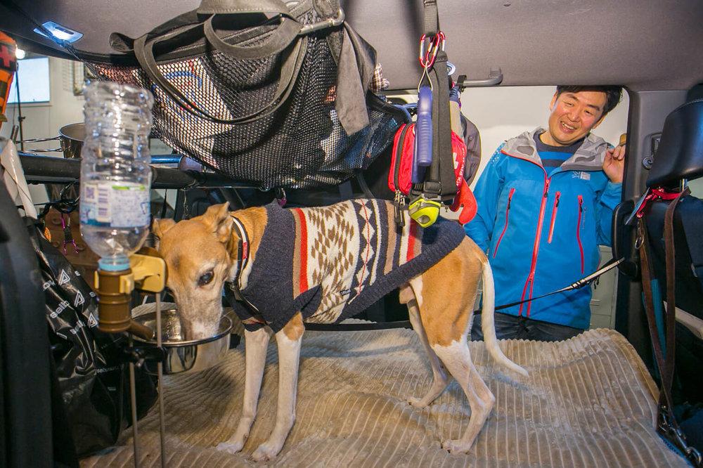 フリードスパイクの車内で、水を飲むペットの犬