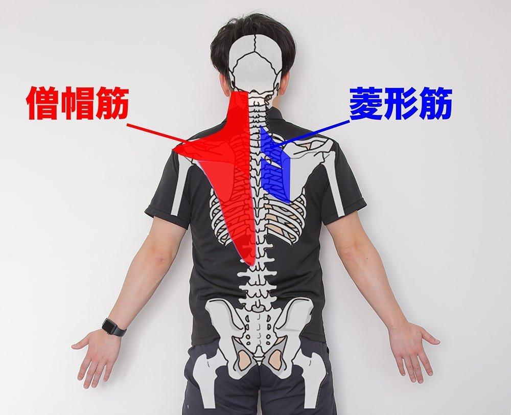 の ストレッチ 背中 痛み