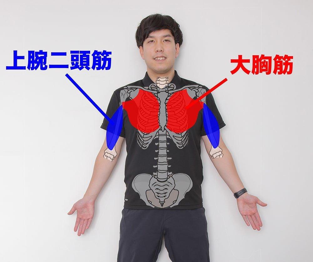 大胸筋と上腕二頭筋を示すオガトレの尾形 竜之介さん