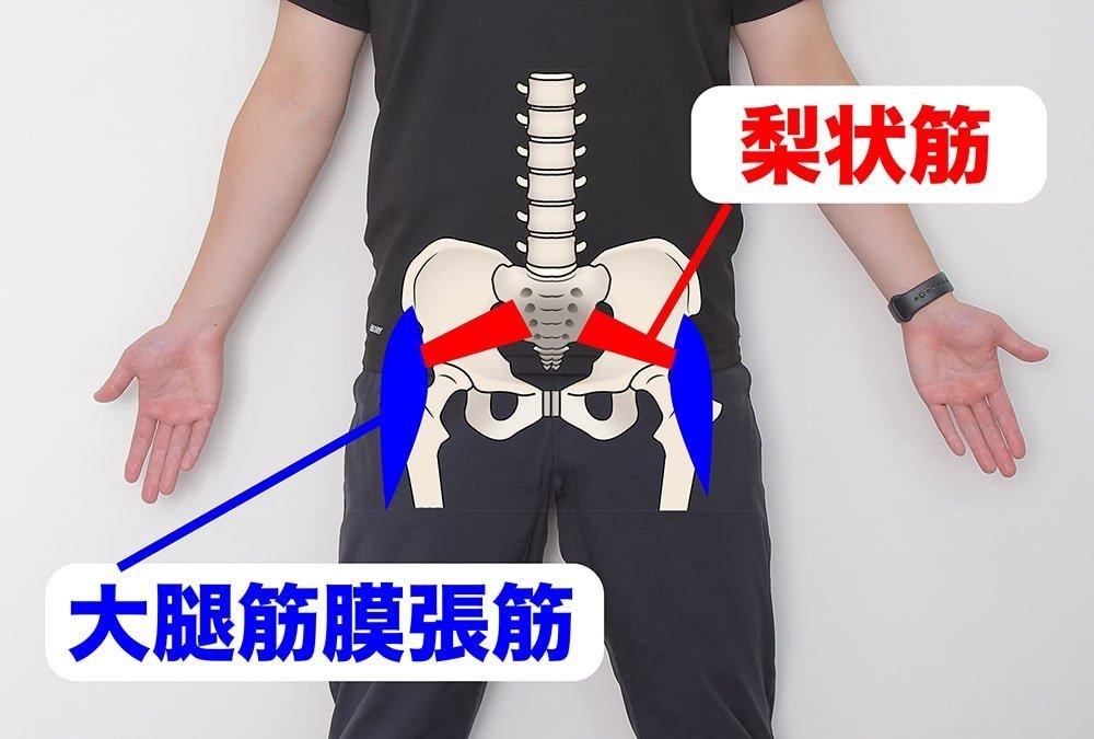 梨状筋と大腿筋膜張筋を示すオガトレの尾形 竜之介さん
