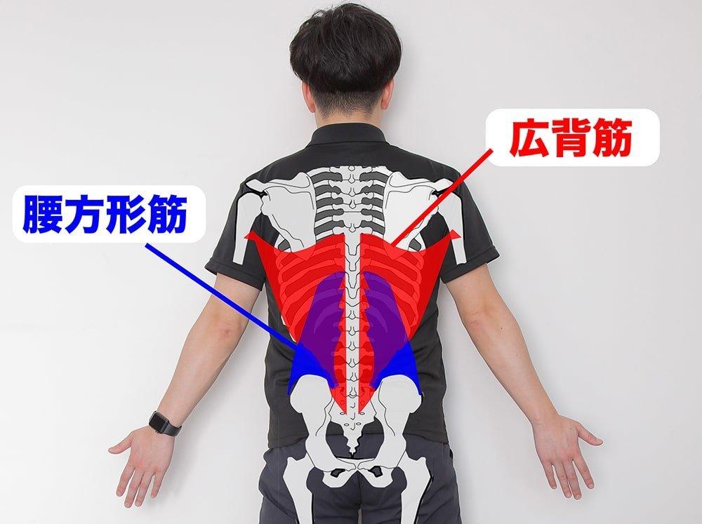 広背筋と腰方形筋を示すオガトレの尾形 竜之介さん