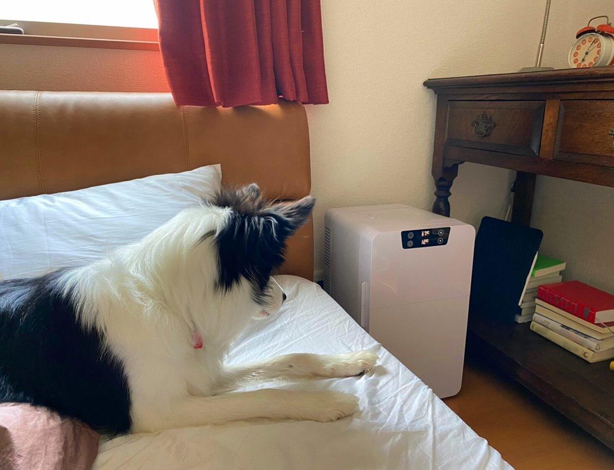 04_ポータブル冷蔵庫をベッドの脇に置いて。愛犬がベッドの上から見ている