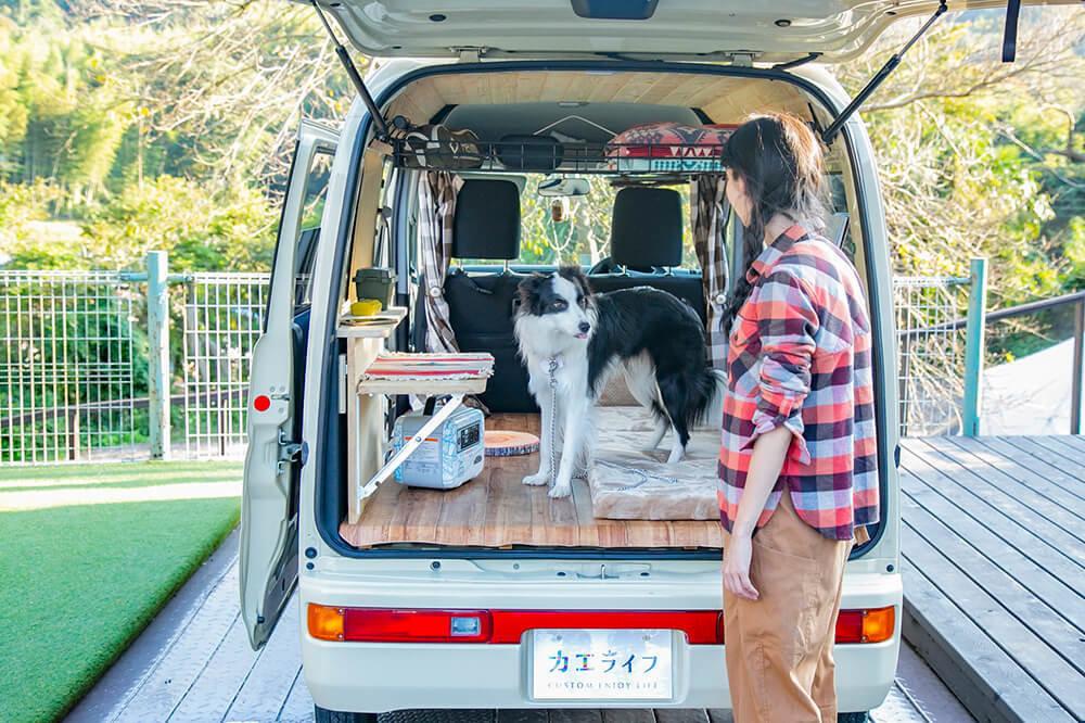 荷室の中に犬のドンちゃんがいて森風美さんを見ている