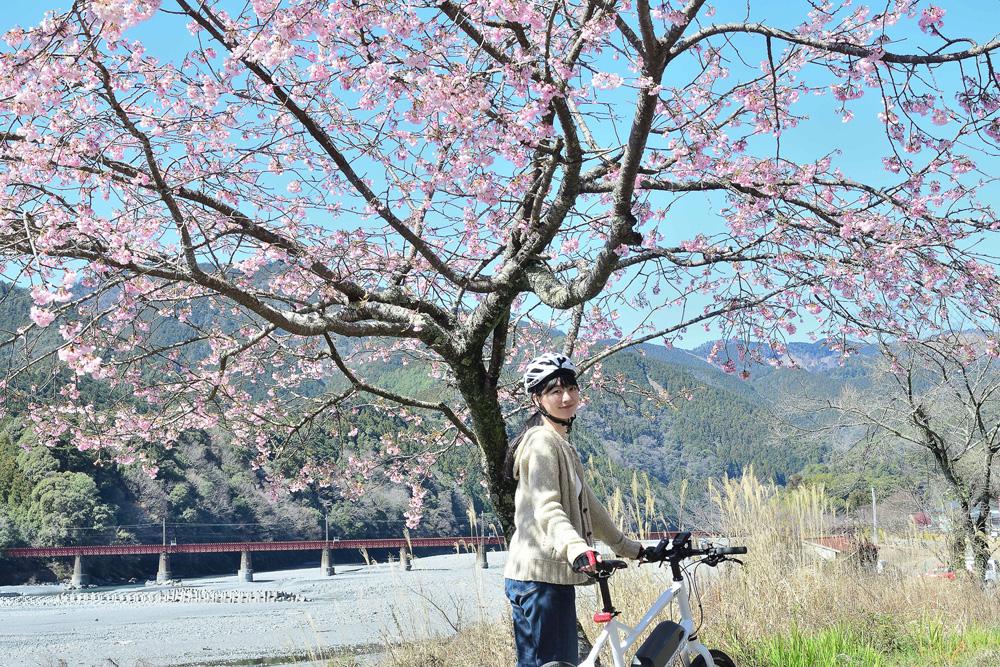 ちょうど早咲きの桜が咲いている場所がありました!