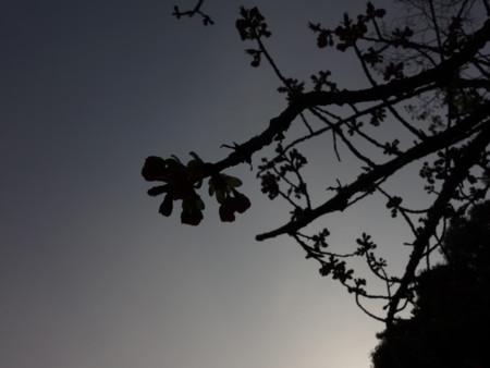 f:id:kaepole:20180401163456j:image