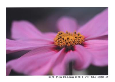 f:id:kaeru_geko:20090914132502j:image