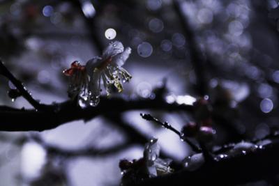 f:id:kaeru_geko:20100201223534j:image